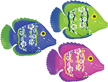 Rainbow Reef Fish